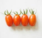 トマトの背くらべ